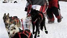 Post, Lebensmittel und Gold - alles wurde mit Hilfe von Schlittenhunden transportiert.