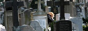 Auch von der Rentenversicherung des anderen kann man profitieren - allerdings erst posthum. Stirbt der Partner nach mindestens einem Jahr Ehe, gibt es Witwenrente.