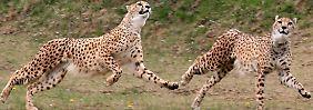 Bilderserie: Tierische Rekorde