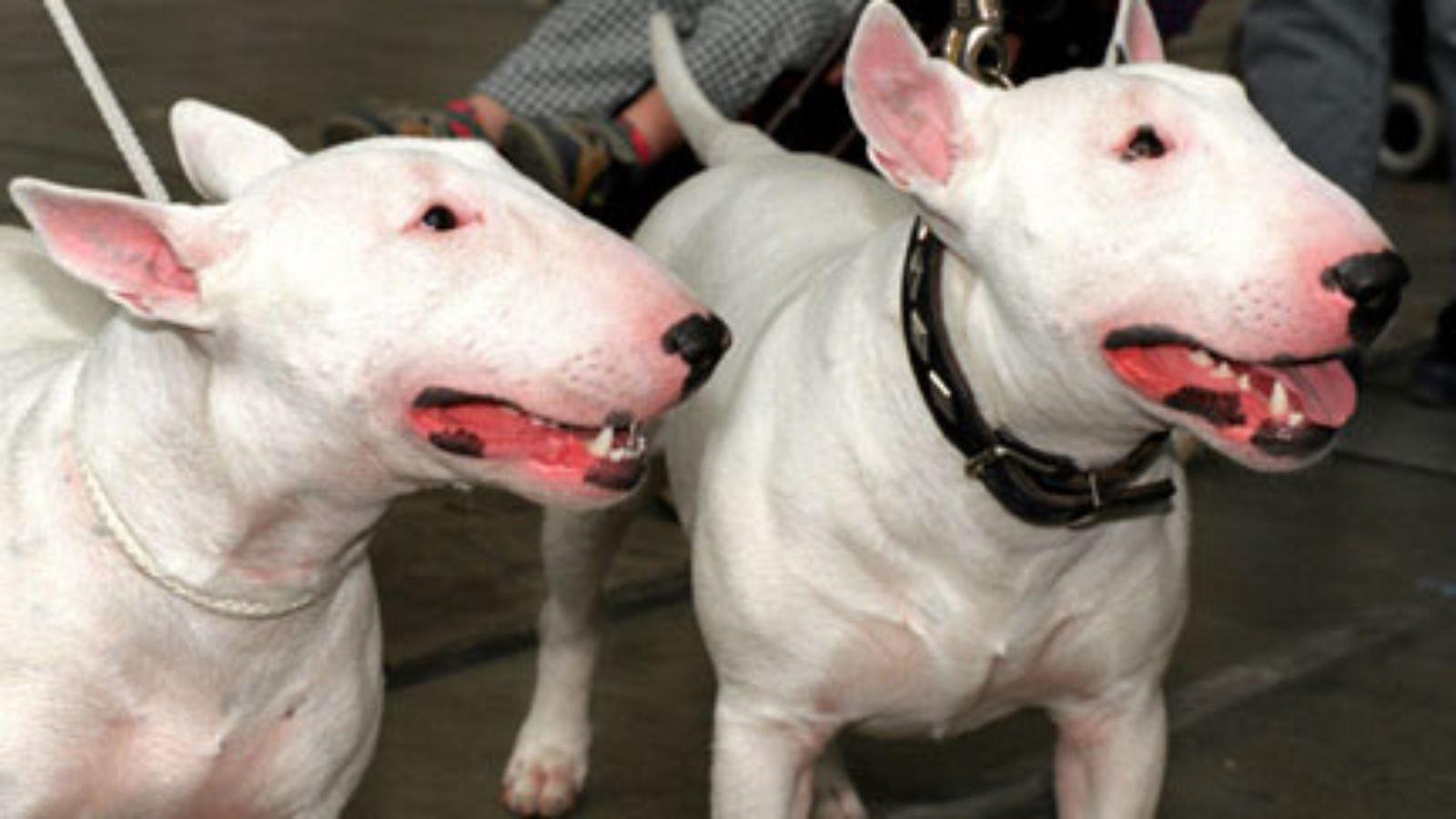 Hässliche hunderassen