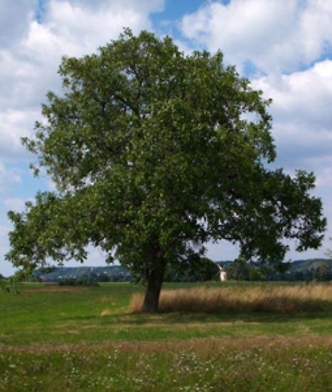 Wir kennen Bäume des Jahres, ...