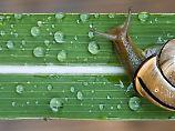Schnecken sind wichtige Bestandteile des Ökosystems.