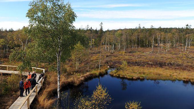Im Hochmoor Mecklenbruch bei Silberborn wurden im Herbst 2012  30.000 Kilogramm Sägespäne verteilt. Sie wirken einem Wasserverlust entgegen.
