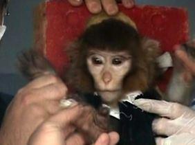 Der Affe vor dem Start.
