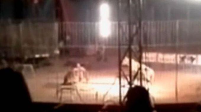 Vor den Augen des Publikums: Tiger tötet US-Dompteur in Mexiko