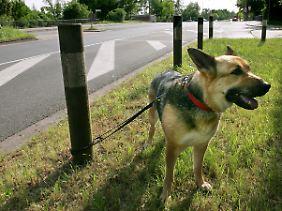 Trauriger Alltag - besonders zur Ferienzeit werden viele Haustiere in Deutschland ausgesetzt.