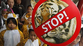Der Tiger lebt gefährlich, besonders in China. Tigerzüchter werben dort für eine Handelsfreigabe.