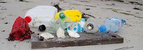 Tragödie unter Wasser: Plastikmüll verdreckt die Ostsee