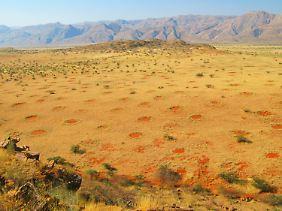 Feenkreise im Marienfluss Valley, Kaokoveld, Namibia.