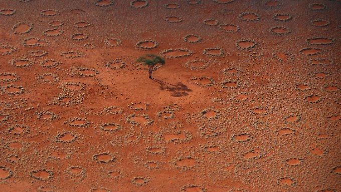 """Antilopenspuren zwischen """"Feenkreisen"""" in Namibrand, Namibia."""