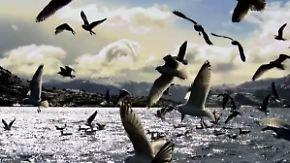 """Beeindruckende Bilder: Film zeigt """"Die Nordsee, unser Meer"""""""