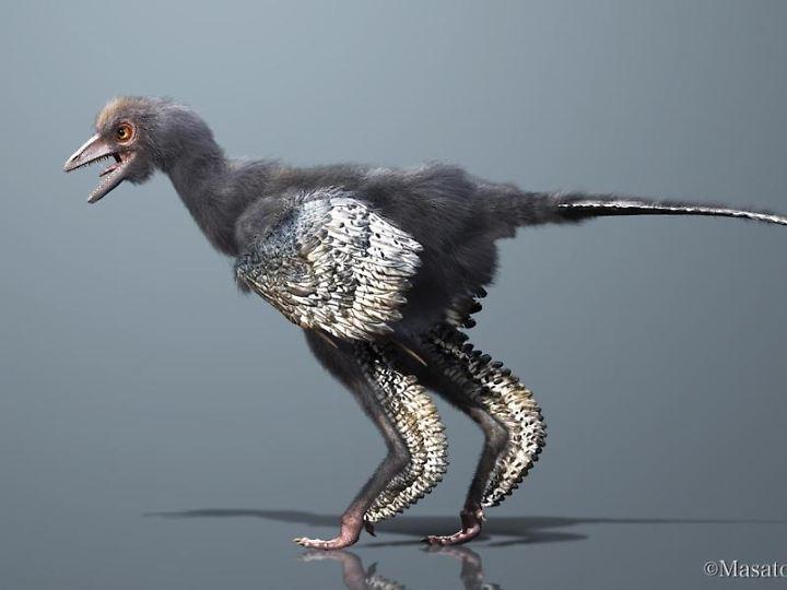 Rekonstruktion eines Archaeopteryx.