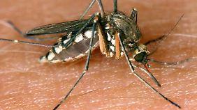 Wer das Pech hat, eine Schweiß-Zusammensetzung zu haben, auf die Mücken fliegen, wird öfter gestochen.