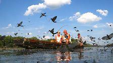 Sie flattern, flitzen, schwimmen, springen: Die größten Insekten der Welt