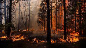 Der Brand im Yosemite-Nationalpark ist noch nicht unter Kontrolle.