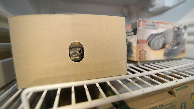 Der Kühlschrank ist ein geeigneter Ort, um Schildkröten sicher über den Winter zu bringen.
