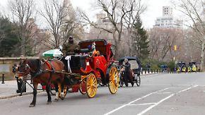Seit 150 Jahren im Central Park: New Yorker Bürgermeister will Pferdekutschen abschaffen