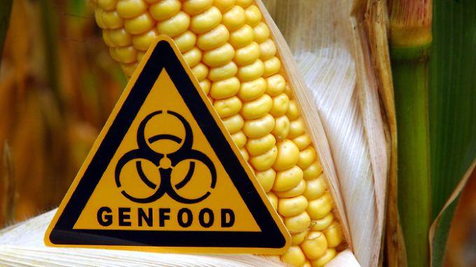 Mehrheit der Deutschen dagegen: EU-Staaten stimmen über  Anbauerlaubnis für Genmais ab