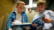 Lesen und kuscheln: Katzen und Kinder werden Bücherkumpels