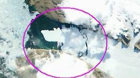 Beweis für den Klimawandel: Rieseneisberg löst sich von Gletscher