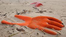 Fast die Hälfte ist Plastik: Müll überall auf Europas Meeresboden