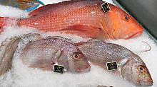 Todeszonen breiten sich aus: Weniger Fisch durch wärmere Meere