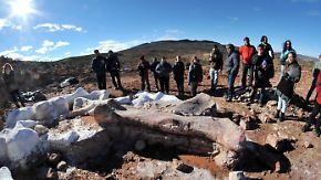 Sensationsfund in Argentinien: Deutsche Forscher bewerten Riesensaurier vorsichtig