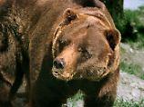 Devisenreserven reichen noch: Der russische Bär kann noch ausharren