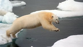 Rekordwerte an den Polen: Neue Satellitenbilder offenbaren verheerende Eisschmelze