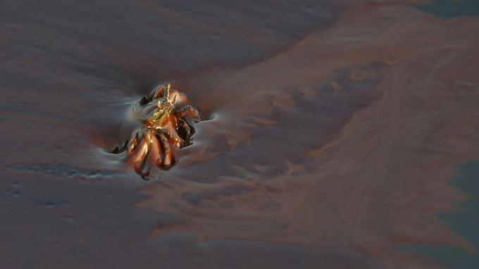 Eine Krabbe quält sich durch den ölverschmierten Schlick.