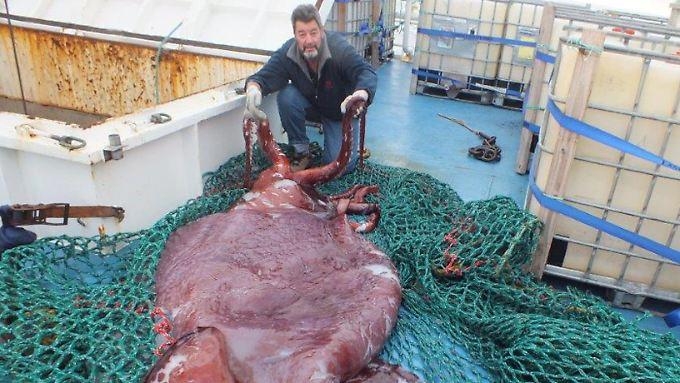Größter Kalmar Der Welt