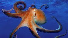 Mythenumrankte Meerestiere: Von Sepien, Kraken und Kalmaren