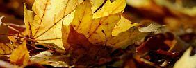 Sieht schön aus und raschelt im trockenen Zustand. Feucht stellt Herbstlaub auf Gehwegen aber nicht selten eine Gefahr dar.
