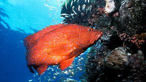 """""""Es ist noch nicht zu spät"""": Korallen am Great Barrier Reef sterben massenweise"""