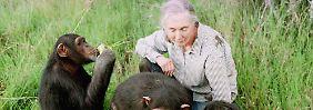 """Die sanfte Besessene: Jane Goodall """"muss es tun"""""""