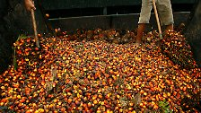 Zum Essen, Pflegen und im Tank: Der Palmöl-Boom