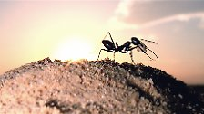 Nutztier oder Schädling?: Die Ameise