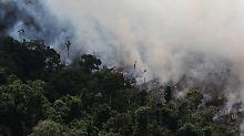 Brandrodung und illegaler Holzeinschlag: