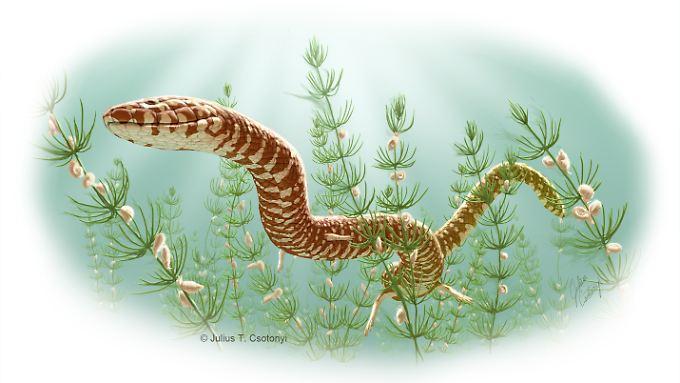 Illustration einer Schlange der Gattung Parviraptor estesi aus der Kreidezeit, die in einem Teich schwimmt.
