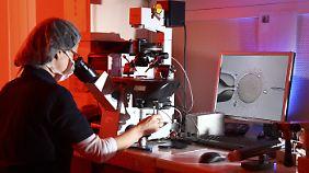Wenig romantisch: Unterm Mikroskop werden Spendersamen in die Eizelle der Mutter injiziert.