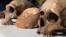 Bedeutender Schädelfund in Israel: Route des Homo sapiens nach Europa belegt