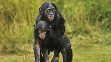 Kuriose Paarungsverhalten: Wenn sich Tiere selbst klonen