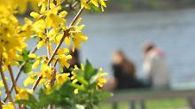 Wetter und Co.: Alles, was man über den Frühling wissen muss