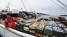 Weitreichende ökologische Folgen: Fischerei lässt Populationen kollabieren