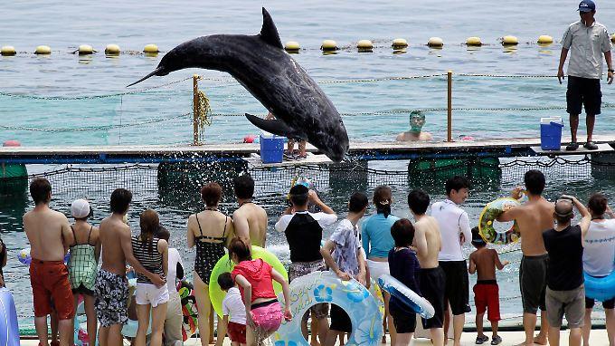 Delfine in japanischen Aquarien sollen künftig nicht mehr aus Taiji kommen.