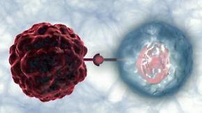 Kein Wundermittel, aber Chance: Dresdner Forscher entwickeln Immuntherapie gegen Krebs