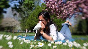 Beschwerden durch Eiweiße: Auch Nicht-Allergiker leiden unter dem Pollenflug