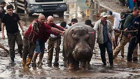 Flut zerstört Zoo: Wilde Tiere streunen durch Tiflis