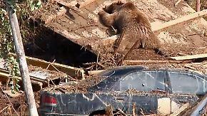 Suche nach Vermissten fortgesetzt: Tote Zootiere liegen in überfluteten Straßen von Tiflis