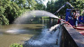 Tote Fische, wuchernde Algen: Hitze stellt Gefahr für Gewässer und ihre Bewohner dar